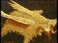 Greek Mythology - Golden fleece myth