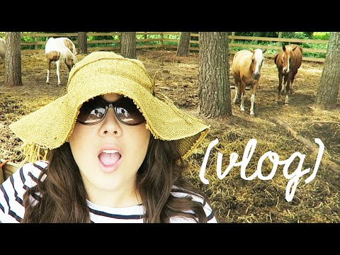 Stacy of chincoteague vlog yourepeat