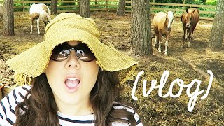 STACY OF CHINCOTEAGUE - VLOG