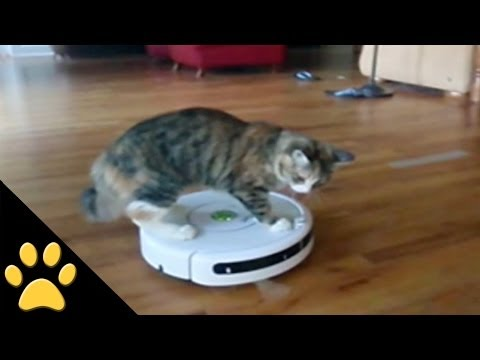 Roomba Cats: Compilation