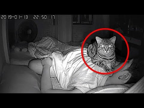 Man Sets Up Secret Camera To Record What His Cat Does At Night And It's Hilarious