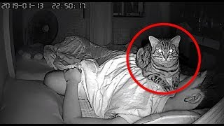 man-sets-up-secret-camera-to-record-what-his-cat-does-at-night-and-it-s-hilarious
