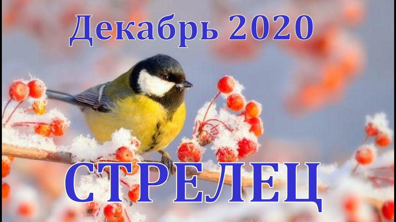 СТРЕЛЕЦ ДЕКАБРЬ 2020 ТАРО ПРОГНОЗ РАБОТА, ДЕНЬГИ,ОТНОШЕНИЯ