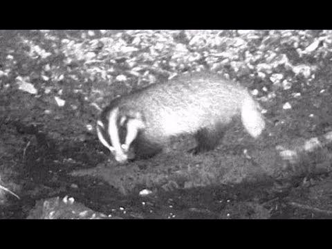 Nachtsichtgerät bushnell equinox z 6x50 test youtube