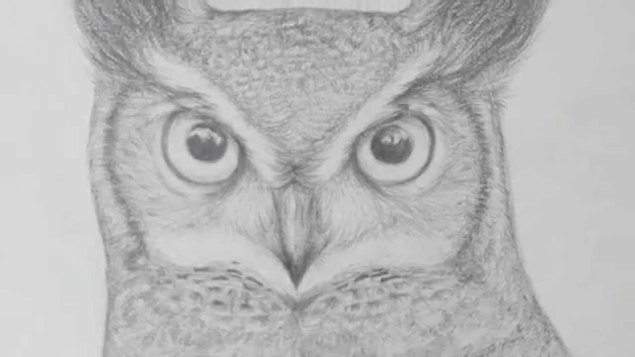 Pencil Owl Drawing