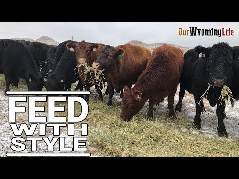 The Methods for Feeding Cows on Our Wyoming Ranch
