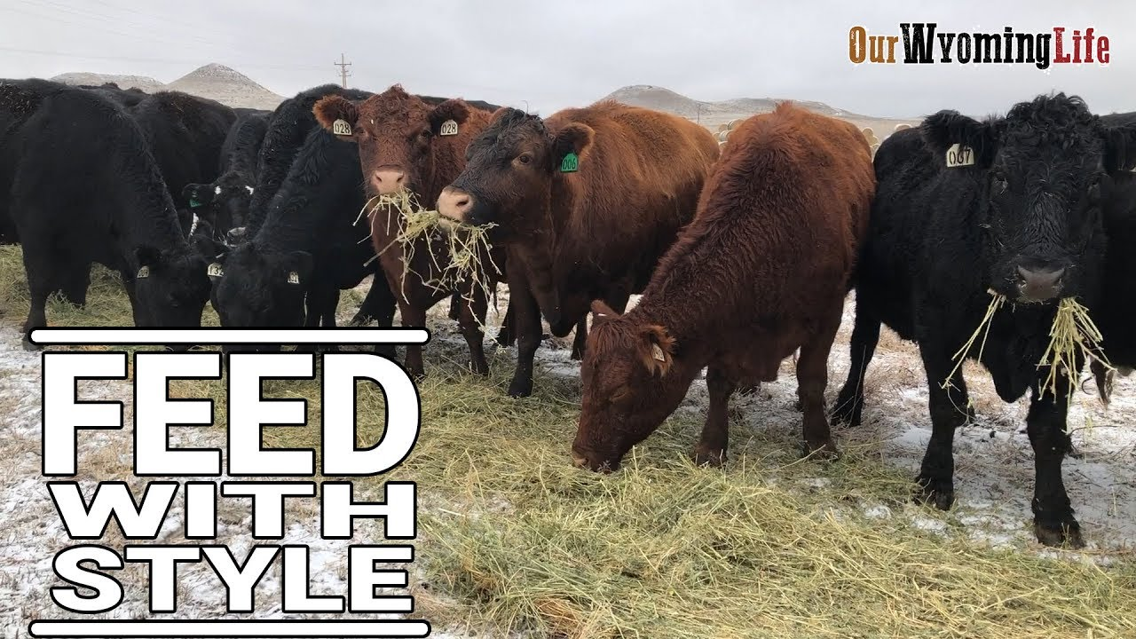 the-methods-for-feeding-cows-on-our-wyoming-ranch