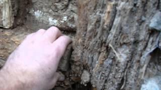 Colombage / pan de bois : désordre par le ciment (3)