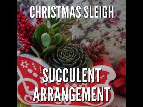 Christmas Succulent Arrangement.Christmas Sleigh Succulent Arrangement Youtube