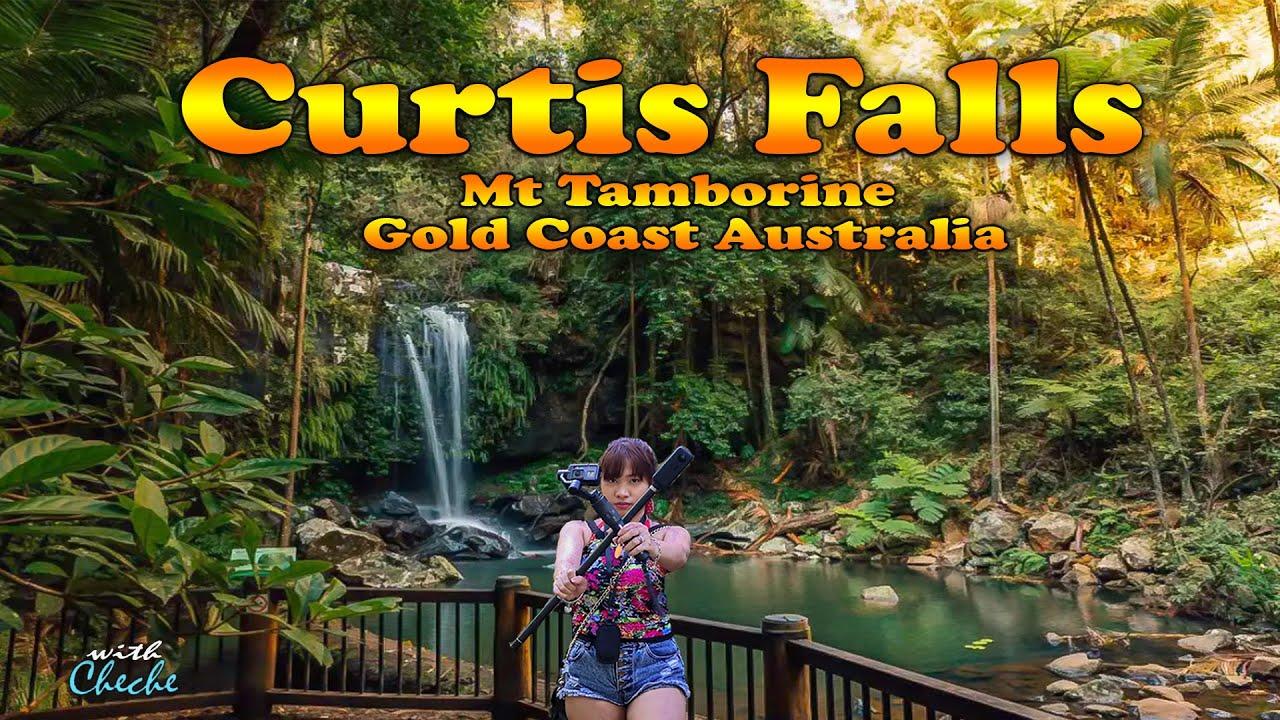 Curtis Falls Mount Tamborine Gold Coast  / Curtis Falls Waterfall | Mount Tamborine Waterfalls