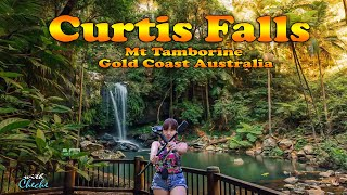 Curtis Falls Mount Tamborine Gold Coast  / Curtis Falls Waterfall | Mount Tamborine Waterfalls