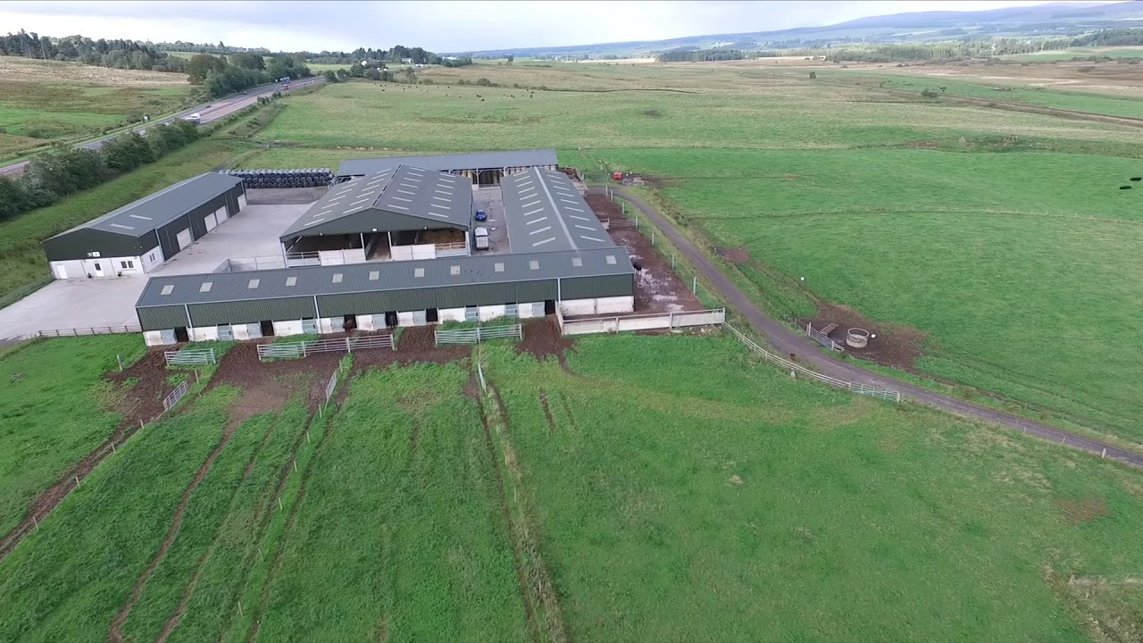 Herr Angus Farm