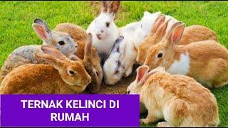 Ternak Kelinci di Tanah Kalimantan