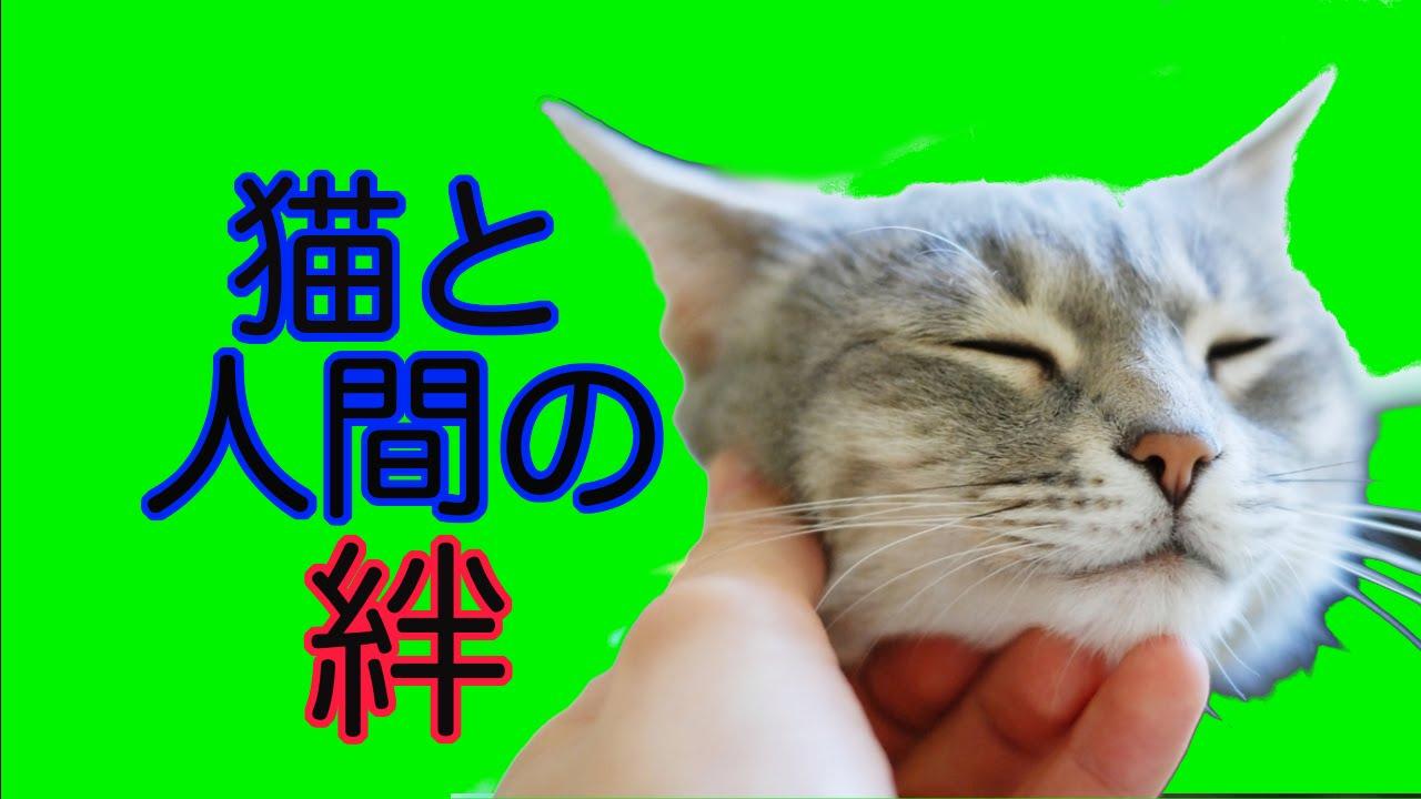 【涙腺崩壊】猫と飼い主の絆