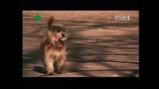 Zwierzeta swiata   Co wiemy o psach  02