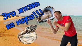 Ловим, готовим и едим устриц. Морские деликатесы за бесплатно.