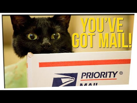 Cat Hair Solves Case of Mysterious Package Sent to the President ft. DavidSoComedy