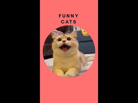 Funny Cats of Tiktok Compilation 2020 l Part 1