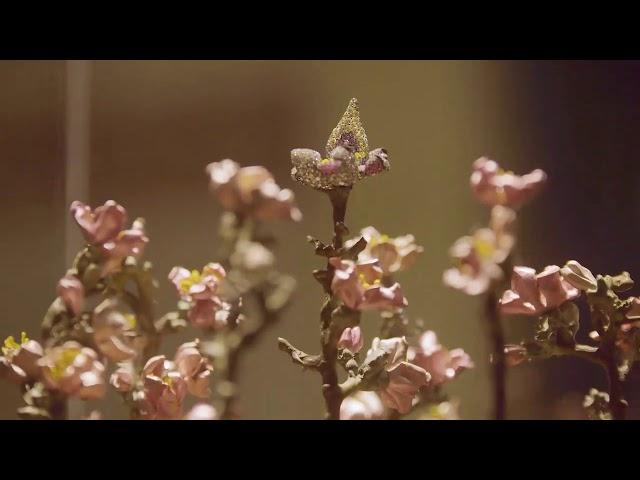 Video presentazione Museo ebraico di Roma.