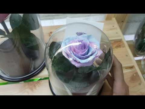 Долговечная роза в колбе - colba-
