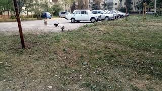 Кошка просит собаку отогнать назойливого жениха)))