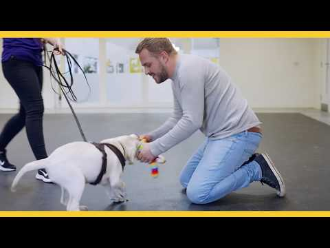 Puppy's First Day At Dog School | Dogs Trust Dog School
