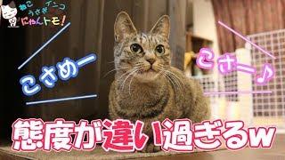飼い主によって態度を変える猫 - Cat changing attitude by owner thumbnail