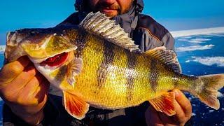 ОГРОМНЫЕ ИРАКЕЗЫ! ЛОВЛЯ ОКУНЯ НА БАЛАНСИР! Зимняя рыбалка 2021 на окуня /Горбачи/