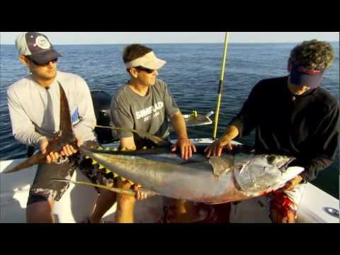 "Into The Blue: ""Giant Yellowfin Tuna on Shrimp Boats"" 2012 : Season 4 Episode 5"