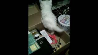 Белый пушистый котёнок впервые увидел коробку/Кот Буслик - 1 серия