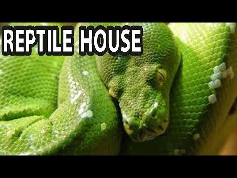 London Zoo - REPTILE HOUSE 4K