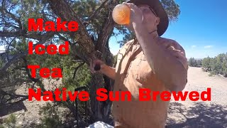 Making Mormon Tea or Indian Tea - A Brewed Sun Tea