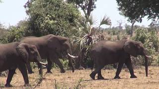 South Africa  -  Kruger National Park  -  2017