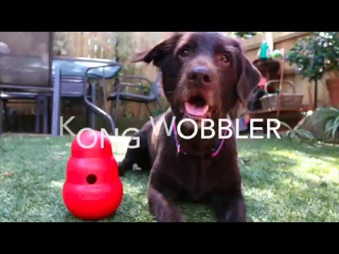 diesel-road-testing-the-latest-boredom-buster-products-for-dogs