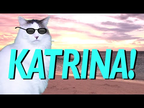 Happy Birthday Katrina Epic Cat Happy Birthday Song
