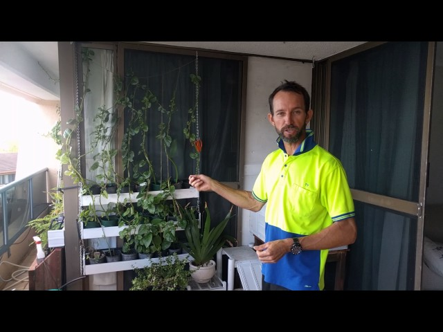 Balcony Hydroponics with Tyson Coote