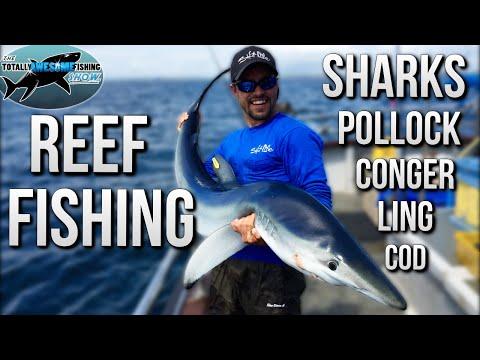 Sea Fishing from Reefs | TAFishing
