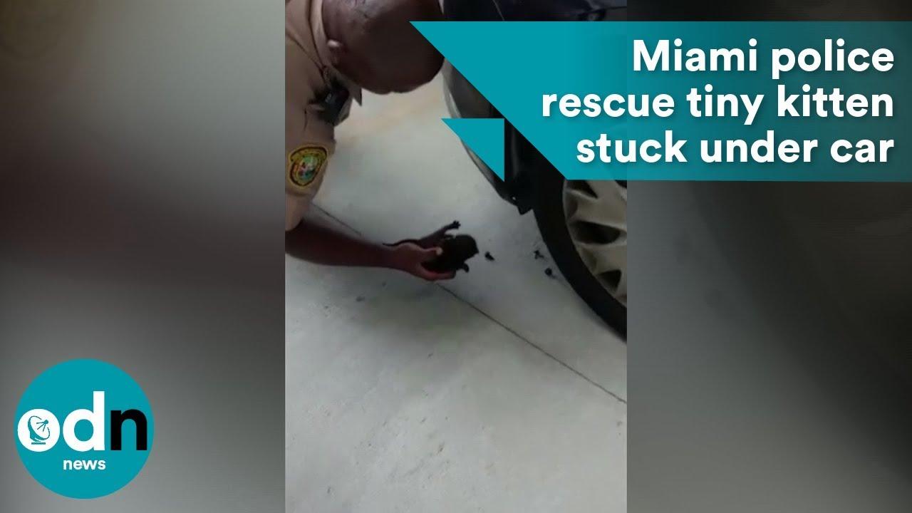 Miami police rescue tiny kitten stuck under car