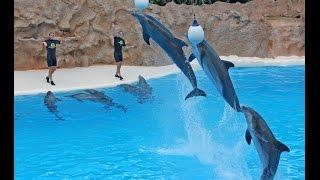 Великолепное шоу дельфинов в Эйлате