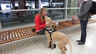 Service Dog Reunited With Owner!!! (4.8.15)