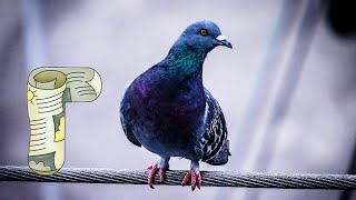 30 животных на букву Г.