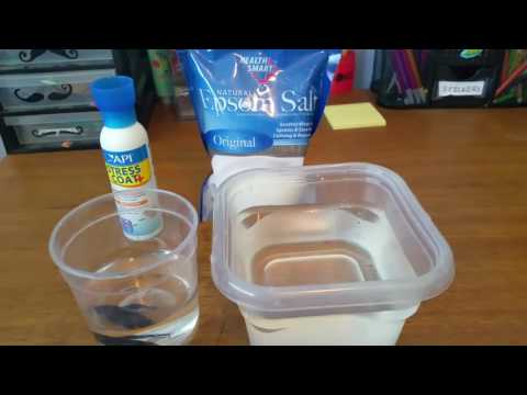 How To Give Your Betta A Salt Bath ◇ Sick Betta Treatment