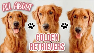 All About Golden Retrievers: Appearance, Hobbies, Personality, Size, Traits + Comparing Larsey
