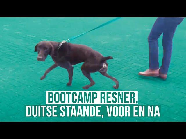 Resner, Duitse Staande - Voor én na de training - Bootcamp Hondentraining
