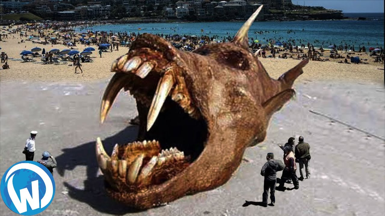 Strangest Things Washed Up On Beaches!