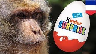 Французский полицейский ударил электрошокером обезьянку-воровку