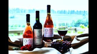 Wine Lovers! Do You Know The Different Types Of Wine