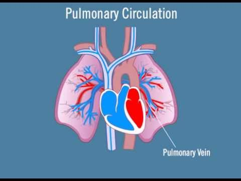 Pulmonary circulation youtube pulmonary circulation ccuart Choice Image
