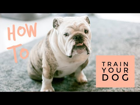 Cesar Millan on How To Train Your Dog