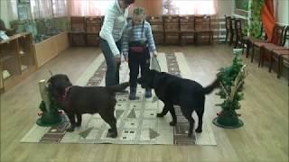 Методы обучения детей с нарушением слуха с использованием собак